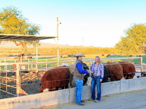 Students chat about their work in front of a cow pen with the campus farm in the background.