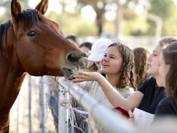 A group of students feeds a horse.