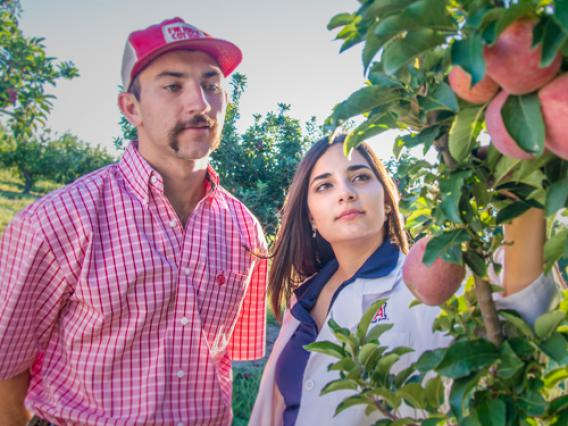 Two University of Arizona standing next to an apple tree in an orchard.