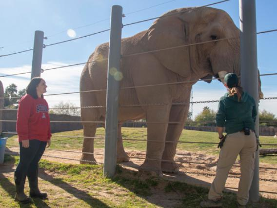 A University of Arizona student observes a zoo worker interacting with an elephant.