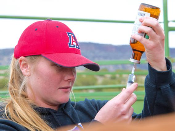 A University of Arizona prepares medication to treat a large animal.
