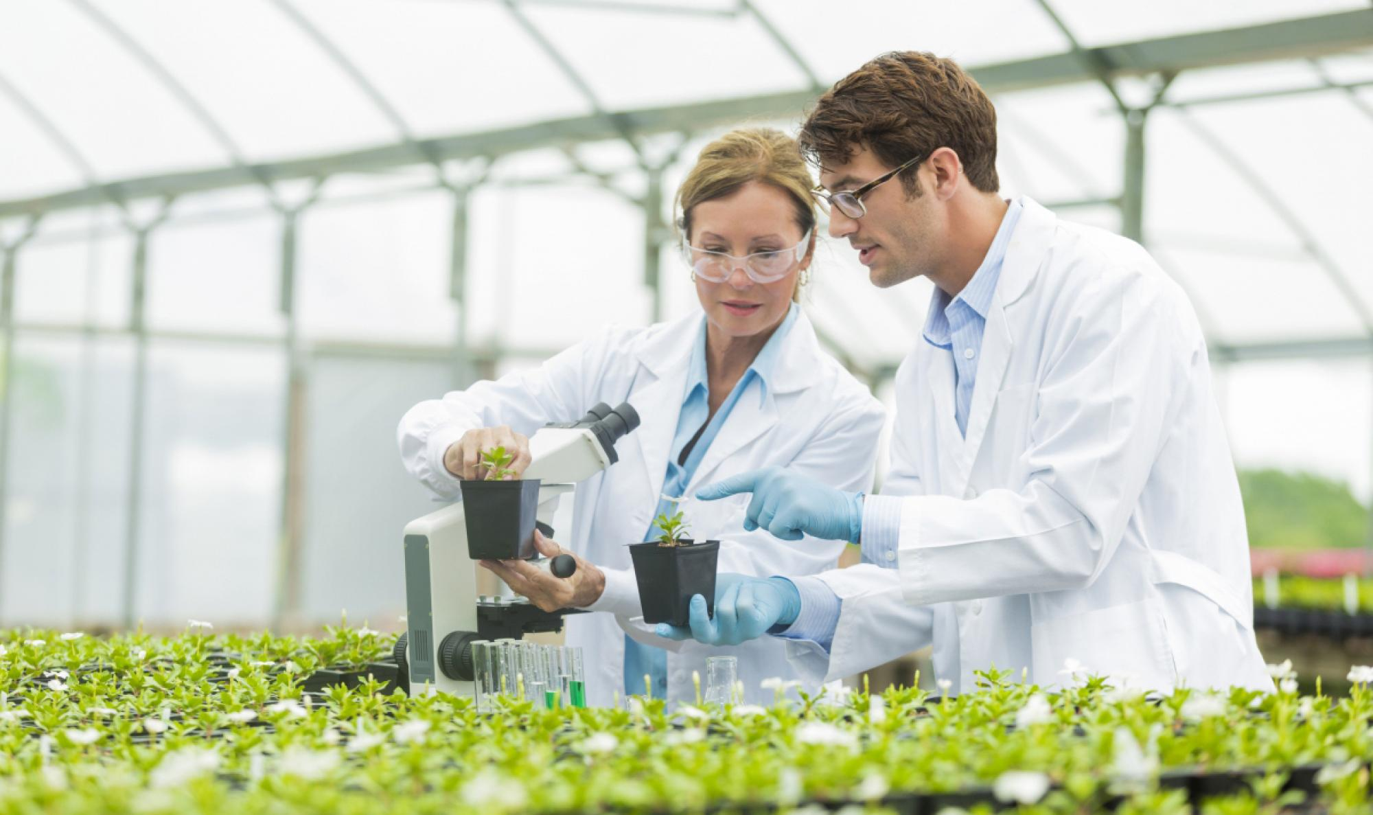 Researchers doing a crop study in a greenhouse